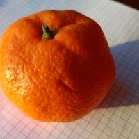 mandarine greffre