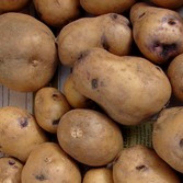 pomme de terre manga
