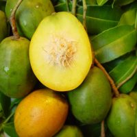 Golden-Apple-caribfruits.fr_